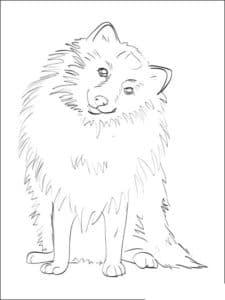 собака шпиц раскраска