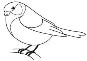 птичка синичка раскраска