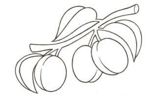 гроздь слив