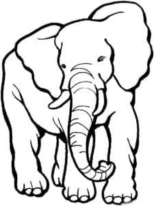 большой слон детская раскраска