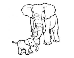 слоненок и слониха