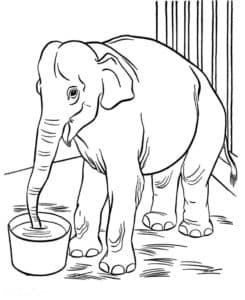 слон пьет из ведра