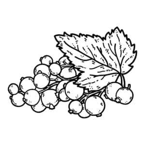 смородина и листик