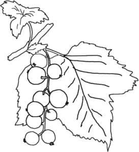 гроздь смородины на веточке