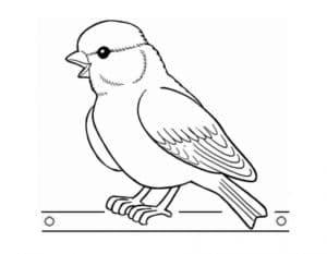 птица снегирь для скачивания