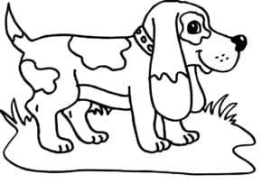 собака в луже