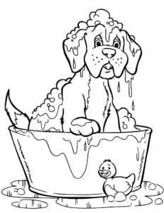 собачка купается