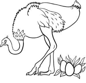 страус и яйца
