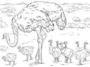 раскраска детская страус