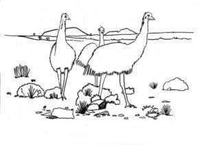 три страуса