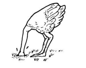 страус засунул голову в песок