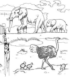 слоны и страусы
