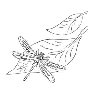 стрекоза на листке