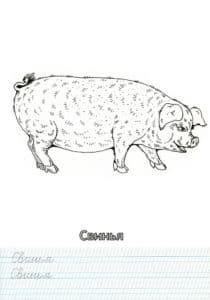 свинья антистресс