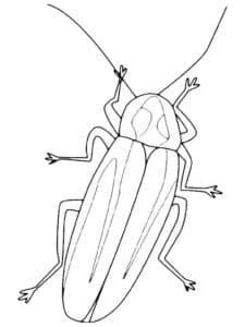раскраска для детей таракан