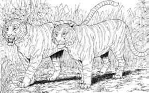 тигры на охоте