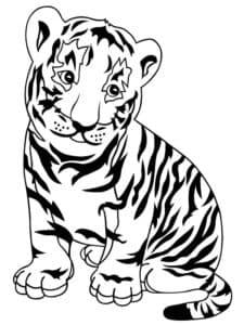 полосатый тигренок