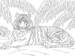 тигр спрятался в тени
