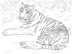 тигр детская раскраска
