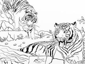 злые тигры