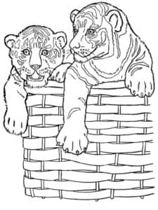тигры в воздушном шаре