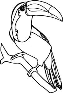тукан на ветке