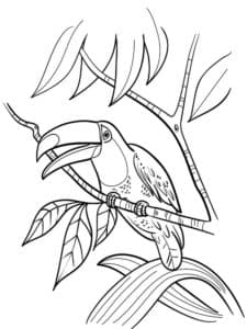 тукан с открытым ртом на дереве