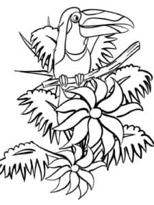 цветочки и тукан