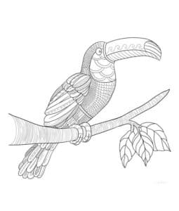 тукан на ветке с листьями