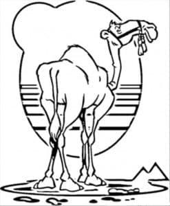 верблюд и закат