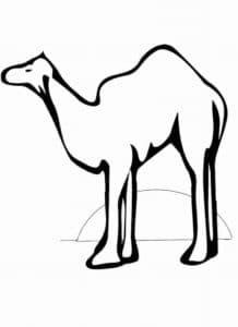 раскраска для детей верблюд