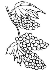маленький виноград