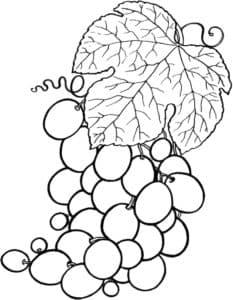 большой виноград с листиком