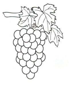 раскраска для детей виноград