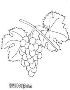 раскраска ягода виноград