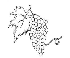раскраска детская кисточка винограда