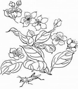 цветы и кузнечик