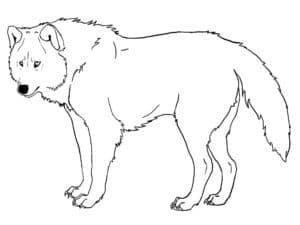 раскраска для детей волк