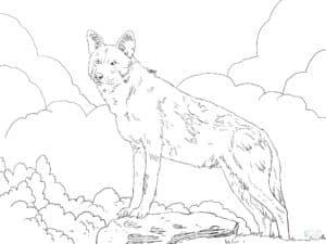 волк и облака