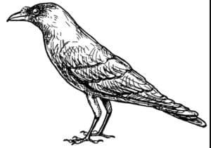 ворона антистресс