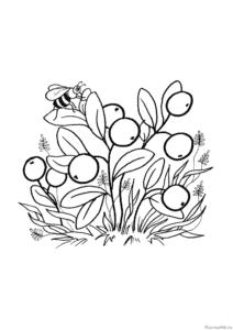 ягоды раскраска