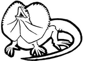 игуана