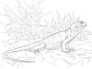 ящерица на природе