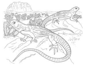 ящерицы в пустыне