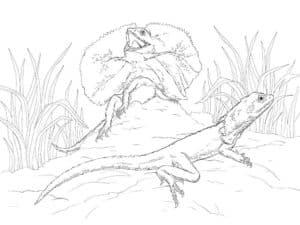 две красивые ящерицы