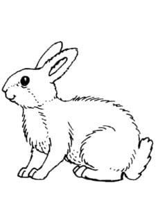 раскраска заяц