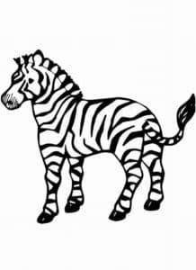 раскраска для детей зебра