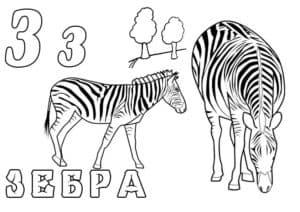 буква З раскраска алфавит Зебра