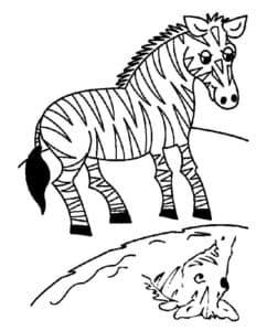 зебра и отражение