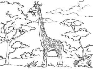 жираф и деревья